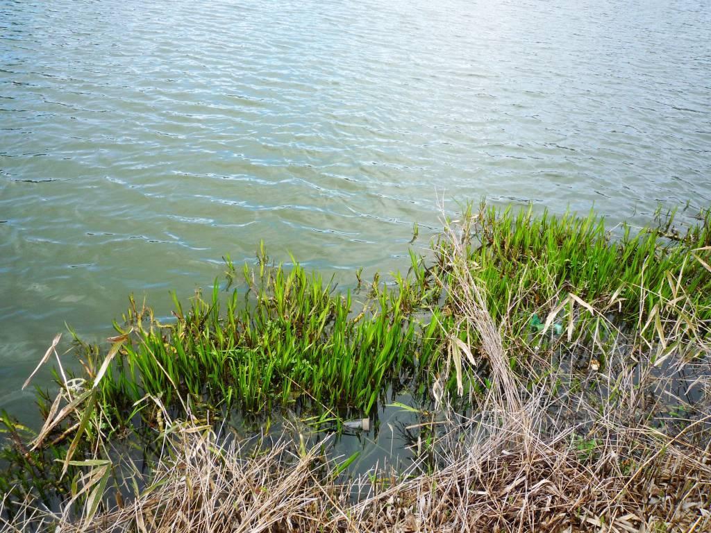 野池のカバー